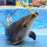 Анапский дельфинарии