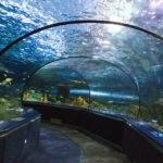 Океанариум Анапа