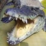 Крокодиловая ферма Анапа